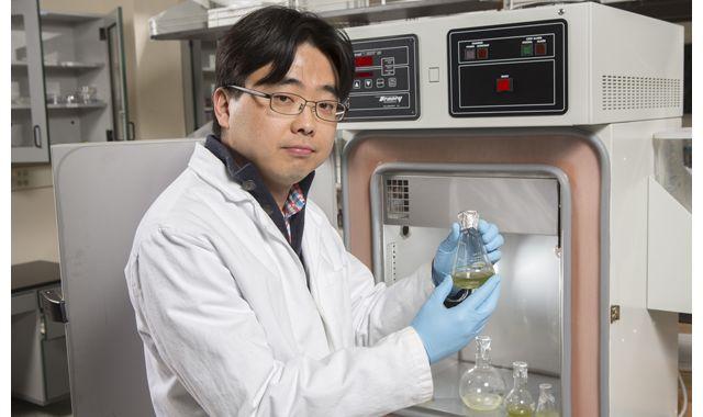 ビンガムトン大学電気・コンピュータサイエンス学科のSeokheun Choi助教授は、論文「従属栄養細菌と光合成細菌の共生培養を用いたミクロスケールの微生物燃料電池における、太陽光利用による自立的な生体電気創出」の共著者の1人である。