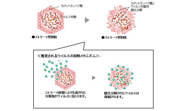 推定されるウイルスの抑制メカニズム